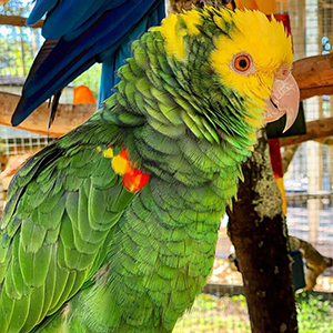 Amazing Animals at the Central Florida Home Expo — Parrot